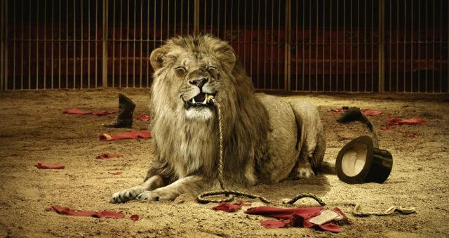 馬戲團裡的獅子