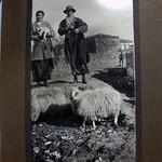 Native sheep & No 3 A.G.H. Sisters