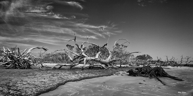 Driftwood Beach Pano in BnW 5194