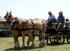 pack animal(0.0), cart(0.0), vehicle(1.0), coachman(1.0), horse(1.0), horse harness(1.0), horse and buggy(1.0), land vehicle(1.0), carriage(1.0),