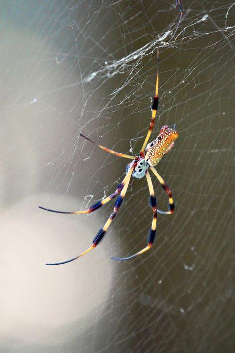 072612_04_bug_spider03