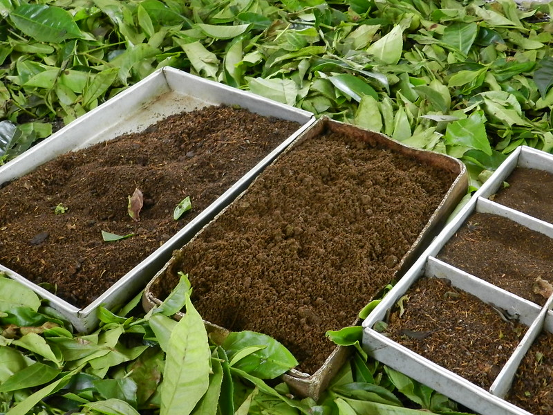 Different types of processed tea leaves