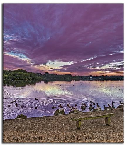 sunrise lancashire swans leigh penningtonflash moz canon7d muzammilhussain penningtonflashcountrypark