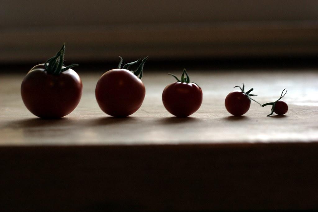 tiny tomato parade