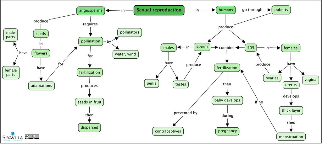 Gr 7 Ch 3 Sexual Reproduction A Summary Concept Map Of Flickr