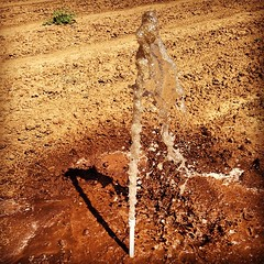 Checking sprinklers #orchard #onlyonafarm #work #walnuts #trees #tagsforlikes #ranch #instacool #instamood #picoftheday #photooftheday #agpics #agrowlife #agriculture #all_shots #farming #farm #farmpicsdaily #like4like #likeforlike #croplife #countrylife