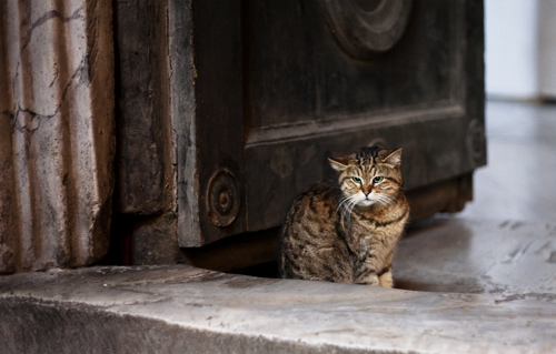 Cat in Hagia Sofia, Istanbul liten