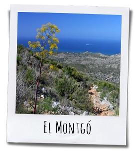 Het park Montgó tussen Javea en Denia is een van de parels van de provincie Alicante