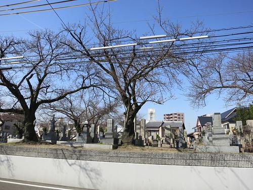 桜塚の桜 まだ咲いてない