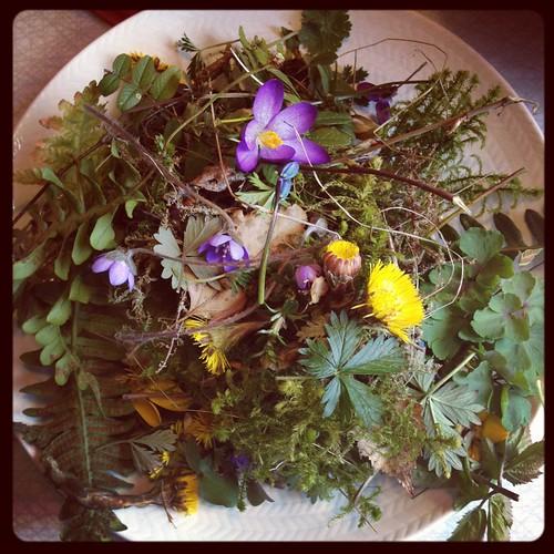 Växter till äggfärgning