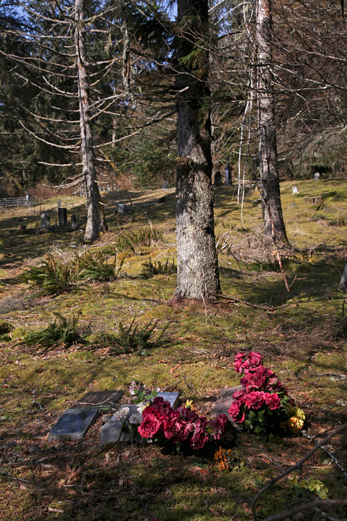 graves and trees in Kasaan Cemetery, Kasaan, Alaska