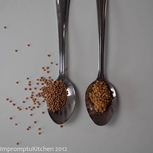 Dijon_ComparingSeeds.jpg