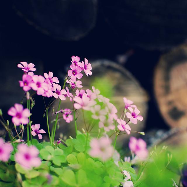 spring02