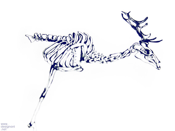 Work in progress_Animal skeletons