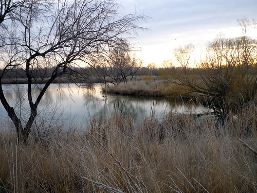 trees reflection sunrise pond flora idaho nampa wilsonsprings wilsonponds beachspond