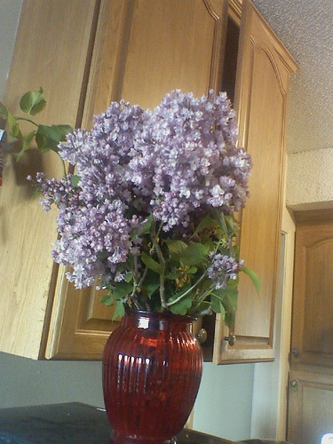 Super Duper Lilacs! by Petunia21