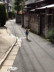 台風一過の朝散歩とらちゃん (2012/6/20)