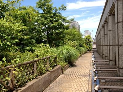 大阪市役所 屋上緑化施設