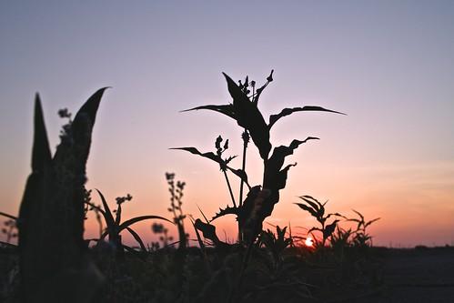 sunset japan evening sigma niigata 2012 foveon x3 x3f dp2x