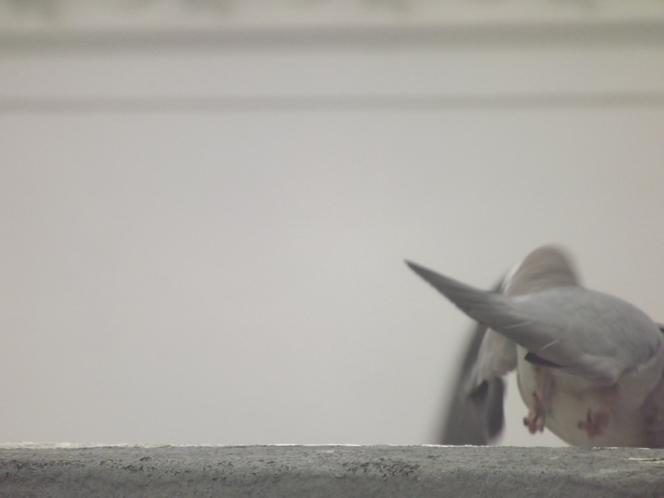 goodbye_pigeon
