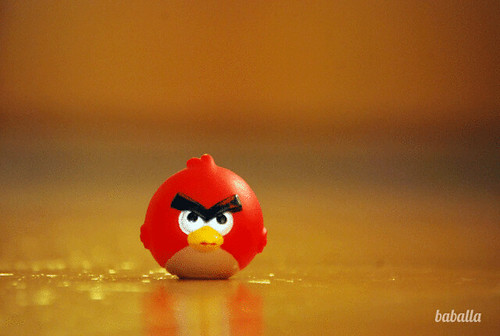 andry_birds3