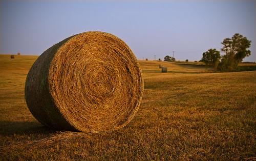 trees sunset sky field canon lens 14 farming sharp ii 7d hay bail 24l taylorbennett