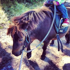 mare(0.0), stallion(0.0), pack animal(0.0), mustang horse(0.0), animal(1.0), mane(1.0), rein(1.0), mammal(1.0), halter(1.0), bridle(1.0), horse(1.0), horse harness(1.0), pony(1.0),