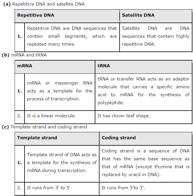 Ncert solutions class 12 biology chapter 6 molecular for Difference between template and coding strand