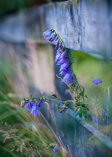 Flower and fence by Brintam