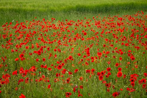 Welwyn Fields (Explored 31/07/12)