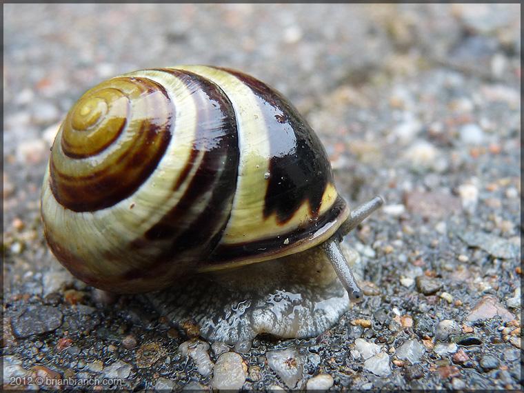 P1270222_snail