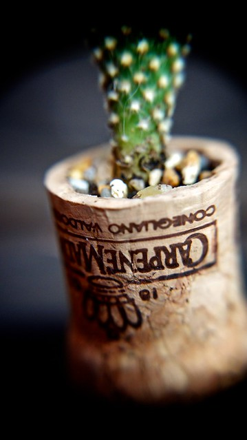 anteketborka.blogspot.com, cactus3