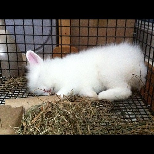 Sleepy bunny is sleepy!