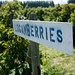 Small photo of Loganberry Picking