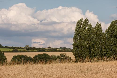 burgundy france montignylaresle travel wheat