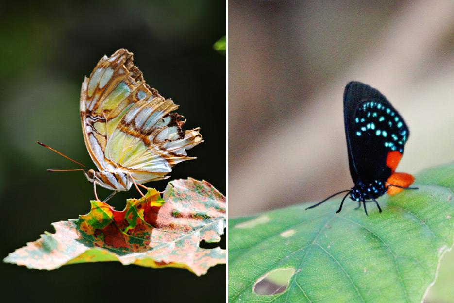 072612_08_butterfly05