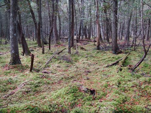 ontario haliburton koc kinarkoutdoorcentre wetlandnearthekinarkoutdoorcentre kinarktrip2011