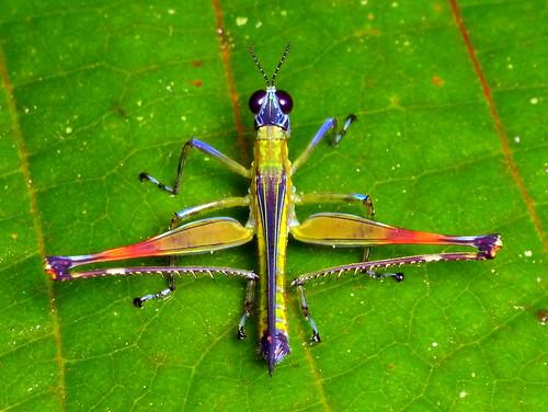 Biodiversity In Unimas