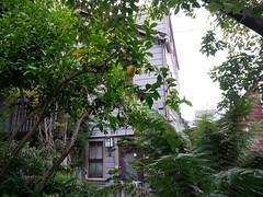 San Francisco Filbert street
