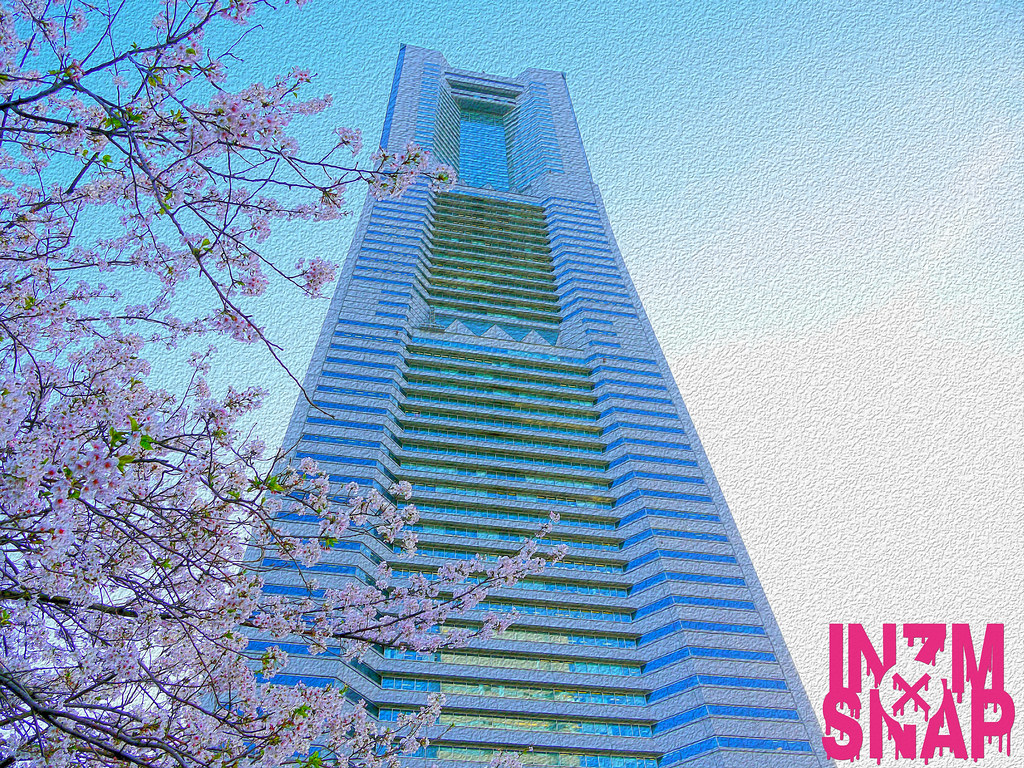 Yokohama | Sakura Flower