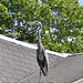 My Next Door Heron