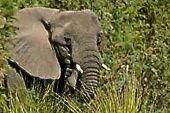 Komfort-Trekking Namibia. Safari im Etosha-Nationalpark.