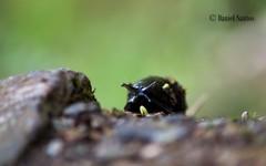 Stylommatophora 2