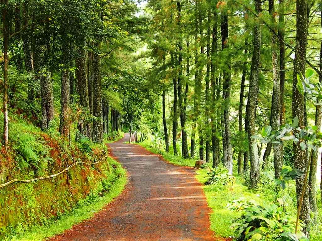 Jalan hutan pinus di wisata gunung salak endah, bogor