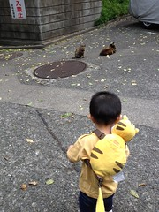 朝散歩とらちゃんと猫 (2012/6/19)