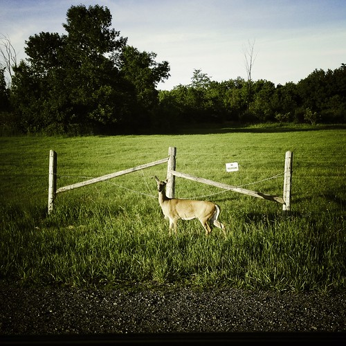 no trespassing deer