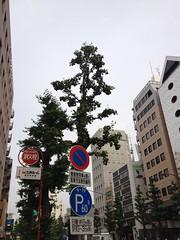 朝散歩 (2012/6/21)