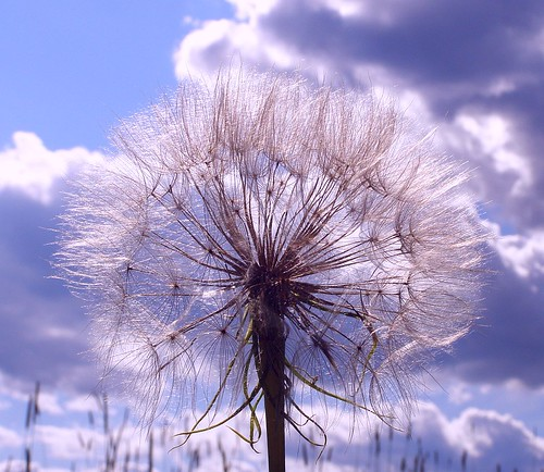2012_0624WesternSalsify0003 by maineman152 (Lou)