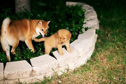 DogsDogsDogs 003