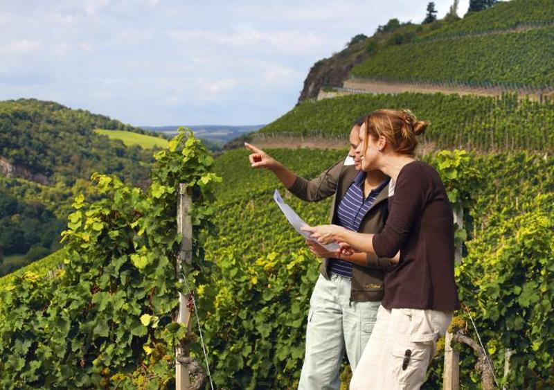 Weinbau Hanglage